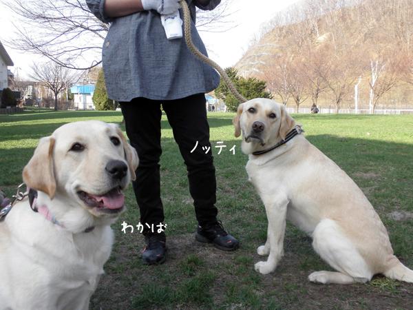 wakabanotei_20120425231800.jpg