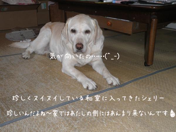 wasitu_20120521180749.jpg