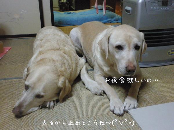 wasitu_20130321213133.jpg