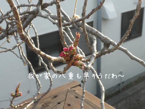 yae_20120502214001.jpg