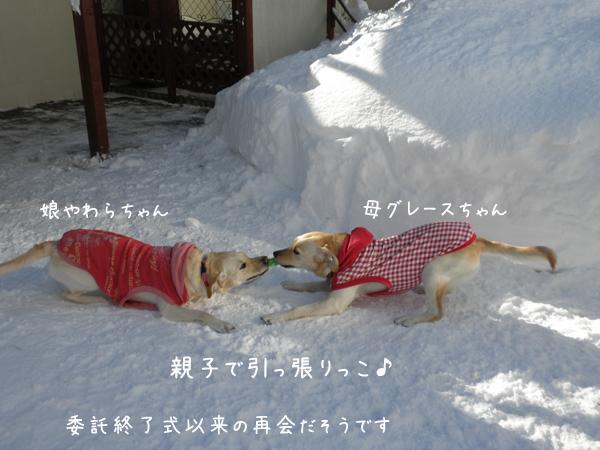 yawagure.jpg
