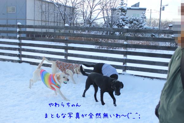 yawara_20121213213406.jpg