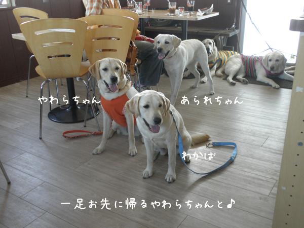 yawarawakaba_20120607215725.jpg