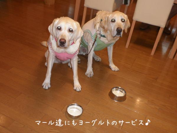 yoguruto_20120824220654.jpg