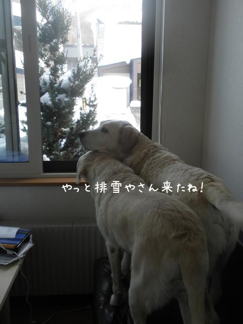 yuki1_20130122212950.jpg