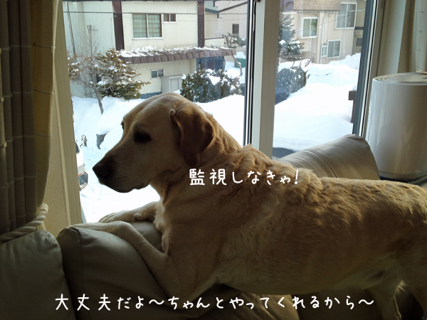 yuki2_20130122212956.jpg