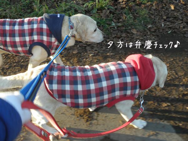 yuu1_20121115211659.jpg