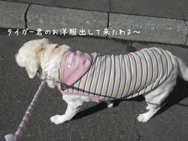 yuubin_20121016214954.jpg