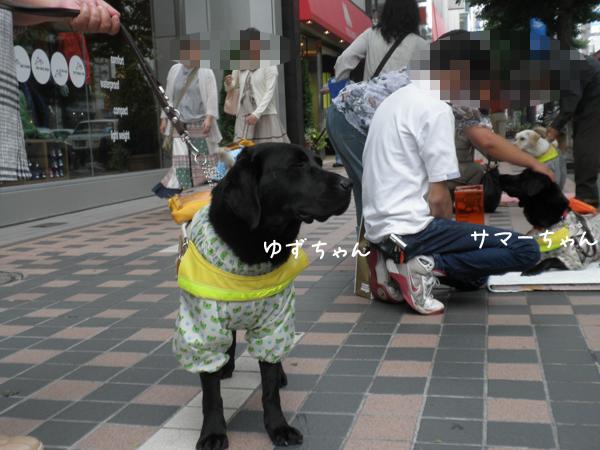 yuzu_20120714214856.jpg
