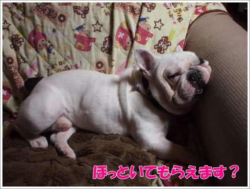 20120603_3.jpg