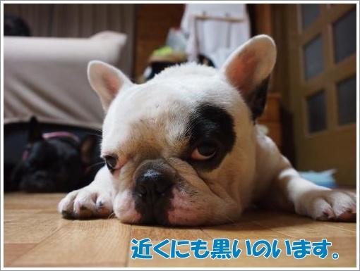 20120719_5.jpg
