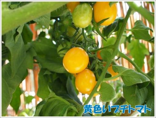 20120722_2.jpg