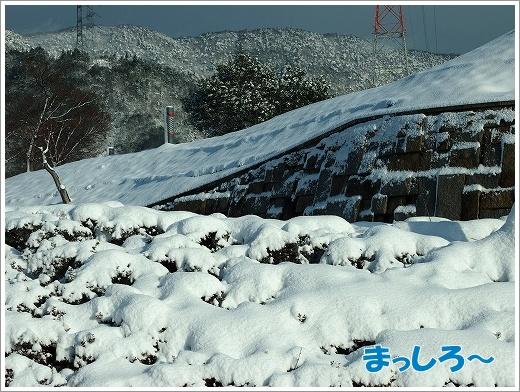 20130129_1.jpg