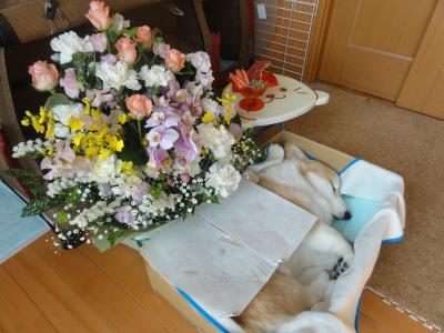 お花、きれいだね。