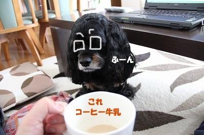 コーヒー牛乳desu