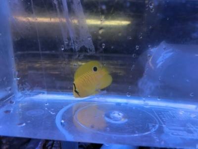 海水魚 417