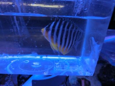 海水魚 425