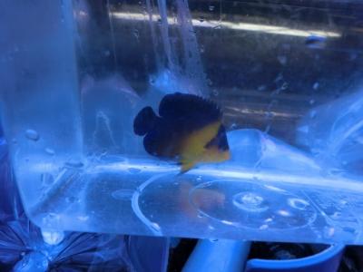 海水魚 421