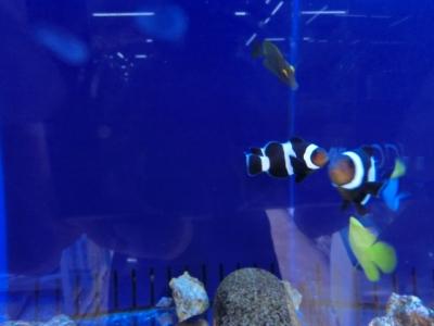海水魚 426