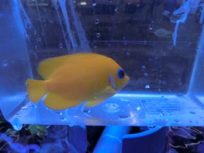 海水魚 429