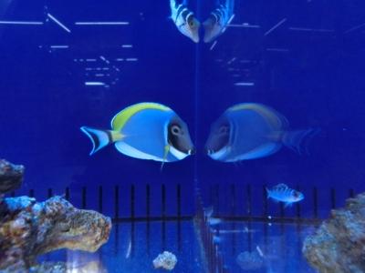 海水魚 438