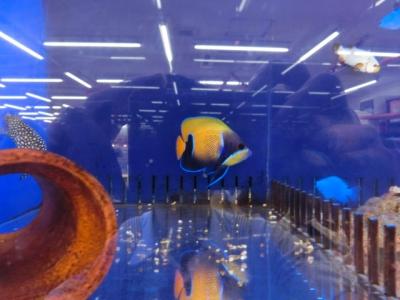 海水魚 436
