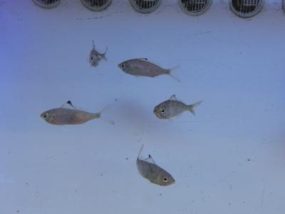 海水魚 437