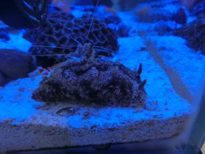海水魚 440
