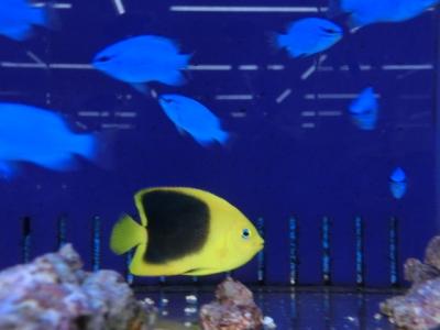 海水魚 441