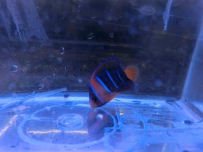 海水魚 446