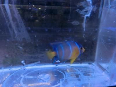 海水魚 449