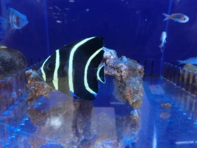 海水魚 450