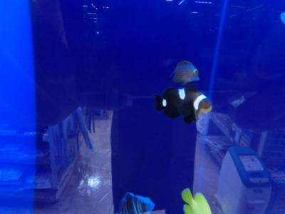 海水魚 455