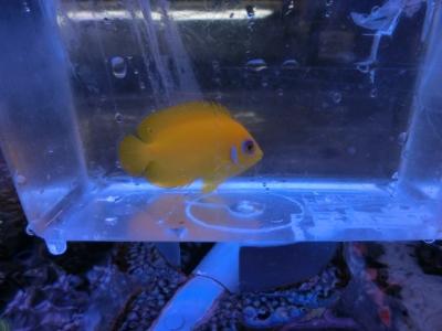 海水魚 461