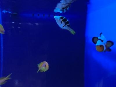 海水魚 457
