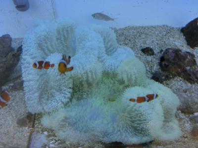 海水魚 458