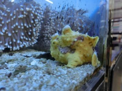 海水魚 459