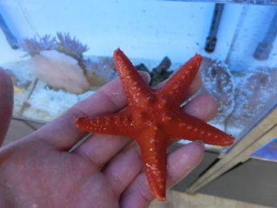 海水魚 460