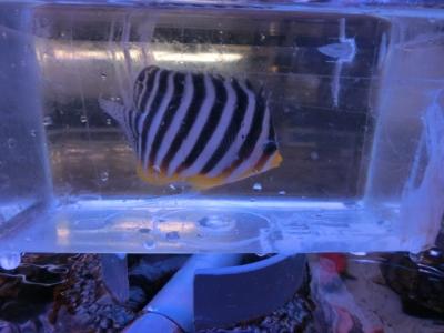 海水魚 462