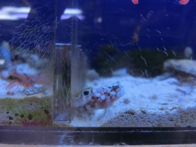 海水魚 464