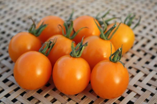 オレンジキャロル2