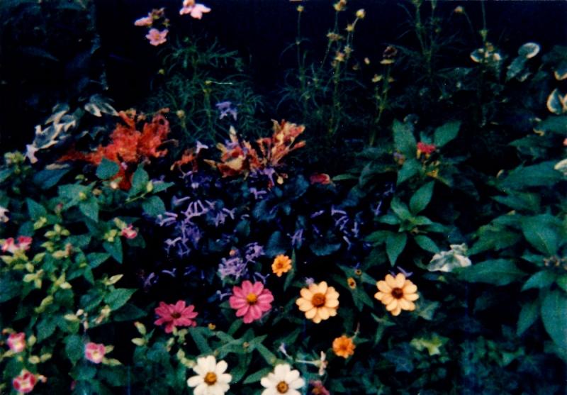 妖しい花2-02