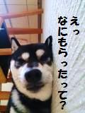 DSC_0438_convert_20140105193139.jpg