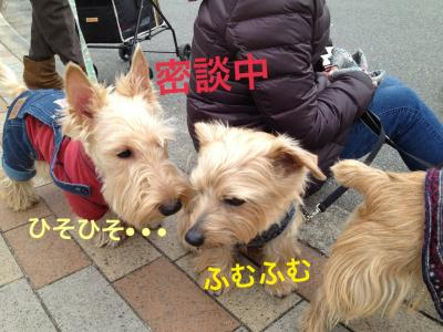 IMG_3235_convert_20130117154347.jpg