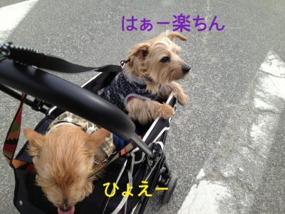 IMG_3239_convert_20130117154447.jpg