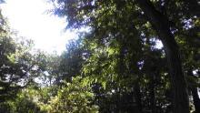 cana -井の頭park