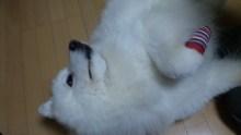 ピアノ弾き語りシンガーソングライター松本佳奈のblog-101127_2142511.jpg