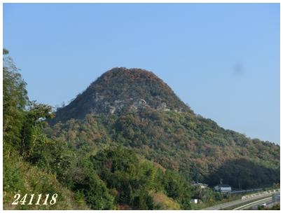 241118木になる山