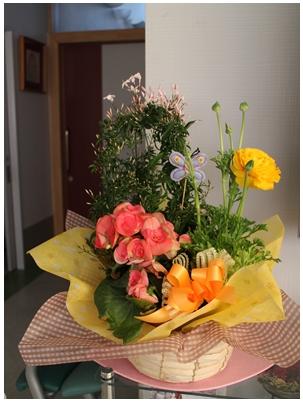 250226春の花1