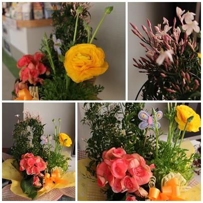 250226春の花2